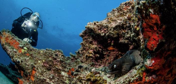 Tauchen in Fuerteventura Grosses Riff